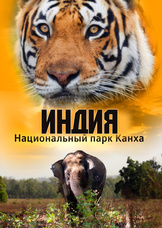 Индия: Национальный парк Канха